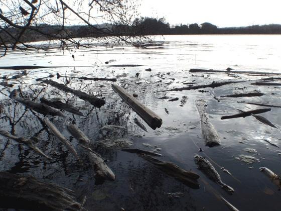Zvýšená hladina řeky a spousta naplavenin ztěžovaly chytání