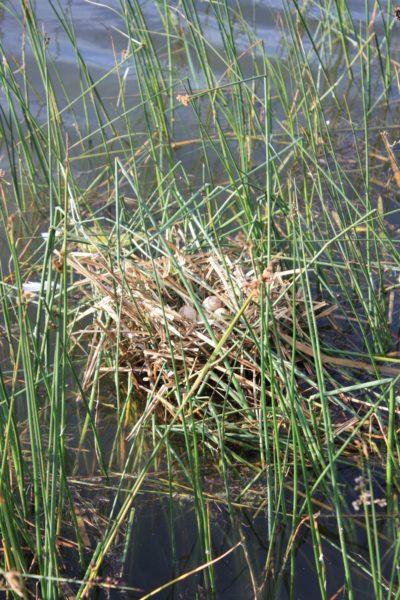 Kolem jezera najdete spoustu volně žijících živočichů...