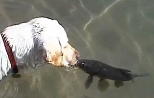 Video: Láska mezi kaprem a psem