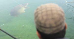 Video: Lov kaprů na šoulačku v křišťálově čisté vodě