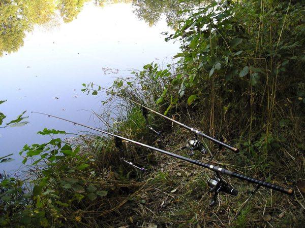 Nástrahy jsou zavezeny, ale žijí zde vůbec nějaké větší ryby?