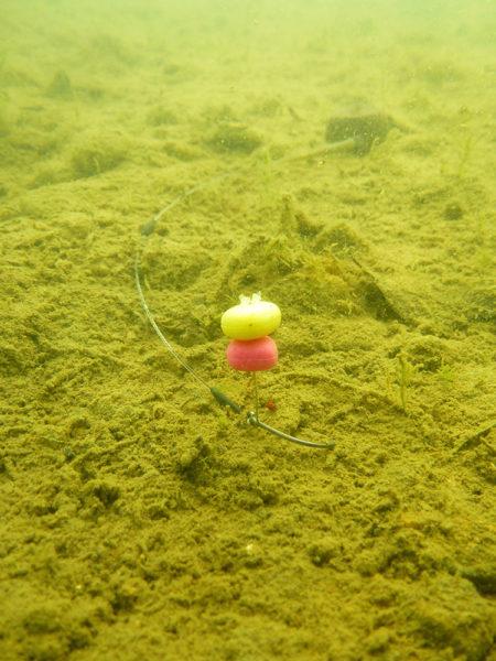 Pod vodou vidíte, jak háčkový návazec leží těsně u dna a téměř mizí