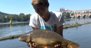 Video: Stalking carp in Prague [Urban fishing 2015]