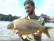 Video: Carp n Prague (Urban fishing 2016)
