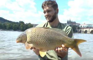 Video: Carp n Prague (Urban fishing 2016)
