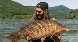 Video: BIG MOUNTAIN CARP (NASH TV)