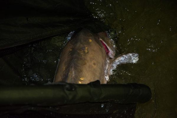 Chyť a pusť, základ športového rybolovu