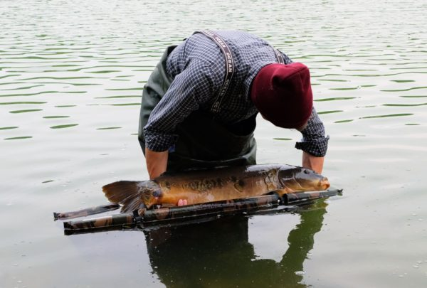 riadkac-vo-vode