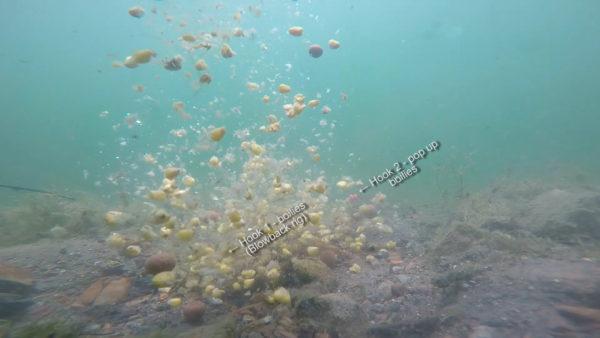 Takhle to vypadá, když do vody sypete krmení