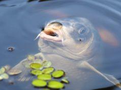 Letní rybolov
