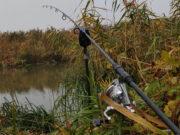 Video: Kapři z malé řeky - podzim 2020