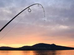 Video: Lov kaprů na Pálavských jezerech - výzva ve vlnách