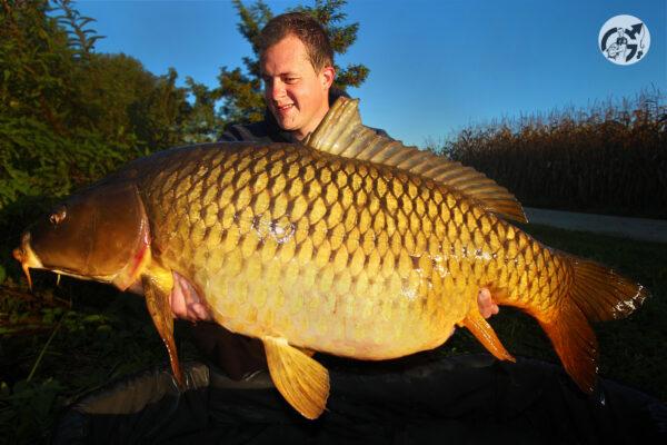 kapr, common carp