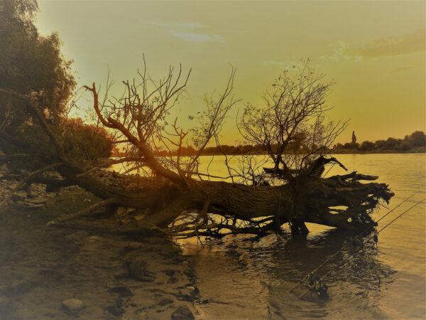 potopený strom