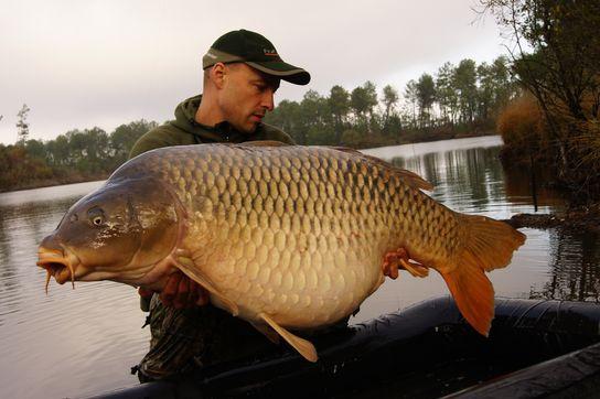 Rekordní kapr 35,2 kg