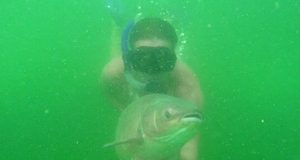 Amuři pod vodou a jejich lov (video)